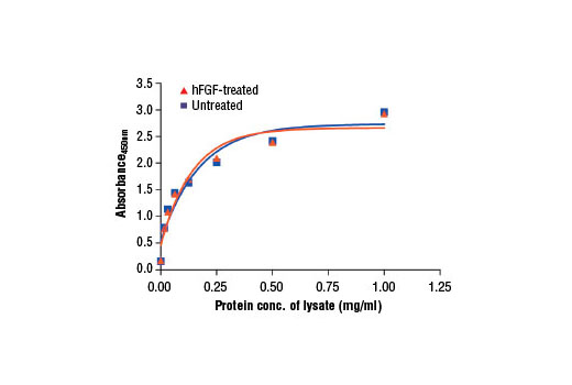 Figure 2: The relationship between protein concentration of lysates from untreated and hFGF basic-treated A-204 cells and the absorbance at 450 nm as detected by PathScan<sup>®</sup> Total FGF Receptor 1 Sandwich ELISA Kit is shown. Unstarved A-204 cells (85% confluence) were treated with Human Basic Fibroblast Growth Factor (hFGF basic/FGF2) #8910 (100 ng/ml) for 2-5 min at 37°C and then lysed.