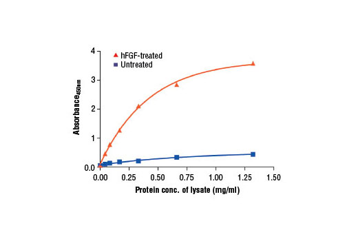 Figure 2: The relationship between protein concentration of lysates from untreated and hFGF basic-treated A-204 cells and the absorbance at 450 nm as detected by PathScan<sup>®</sup> Phospho-FGF Receptor 1 (panTyr) Sandwich ELISA Kit is shown. Unstarved A-204 cells (85% confluence) were treated with Human Basic Fibroblast Growth Factor (hFGF basic/FGF2) #8910 (100 ng/ml) for 2-5 min at 37°C and then lysed.