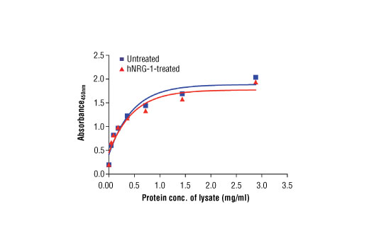 Figure 2: The relationship between protein concentration of lysates from untreated and hNRG-1-treated T-47D cells and the absorbance at 450 nm as detected by the PathScan<sup>®</sup> Total HER4/ErbB4 Sandwich ELISA Kit is shown. Starved T-47D cells (85% confluence) were treated with Human Neuregulin-1 (hNRG-1) #5218 (100 ng/ml) for 2-5 min at 37°C and then lysed.