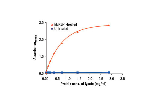 Figure 2: The relationship between protein concentration of lysates from untreated and hNRG-1-treated T-47D cells and the absorbance at 450 nm as detected by the PathScan<sup>®</sup> Phospho-HER4/ErbB4 (panTyr) Sandwich ELISA Kit is shown. Starved T-47D cells (85% confluence) were treated with Human Neuregulin-1 (hNRG-1) #5218 (100 ng/ml) for 2-5 min at 37°C and then lysed.