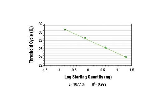 Primer Set Chromatin IP MEST - count 2