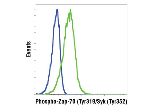 Flow cytometric analysis of Ramos cells, untreated (blue) or treated with anti-IgM (green), using Phospho-Zap-70 (Tyr319)/Syk (Tyr352) (65E4) Rabbit mAb. Anti-rabbit IgG (H+L), F(ab')2 Fragment (PE Conjugate) #8885 was used as a secondary antibody.