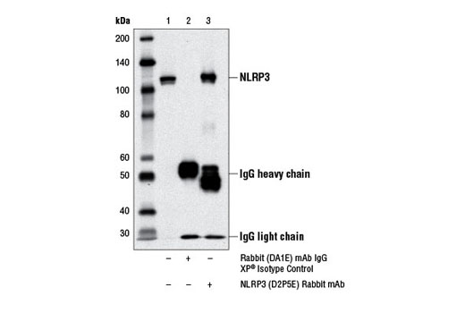 Immunoprecipitation Image 1: NLRP3 (D2P5E) Rabbit mAb