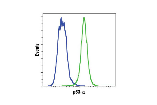 Flow cytometric analysis of ME-180 (green) and MCF7 (blue) cells using p63-α (D2K8X) XP<sup>®</sup> Rabbit mAb. Anti-rabbit IgG (H+L), F(ab')<sub>2</sub> Fragment (Alexa Fluor<sup>®</sup> 488 Conjugate) #4412 was used as a secondary antibody.