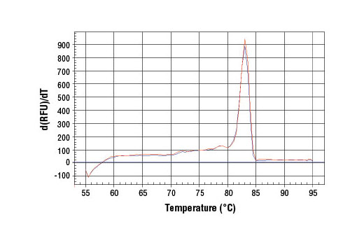 PCR product melting curves were obtained for real-time PCR reactions performed using SimpleChIP<sup>®</sup> Human Bcl-2 Promoter Primers. Data is shown for both duplicate PCR reactions using 20 ng of total DNA. The melt curve consists of 80 melt cycles, starting at 55°C with increments of 0.5°C per cycle. Each peak is formed from the degradation of a single PCR product.