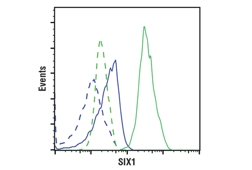 Flow cytometric analysis of LnCap cells (blue) and A204 cells (green) using SIX1 (D4A8K) Rabbit mAb (solid lines) or concentration matched Rabbit (DA1E) mAb IgG XP<sup>®</sup> Isotype Control #3900 (dashed lines). Anti-rabbit IgG (H+L), F(ab')<sub>2</sub> Fragment (Alexa Fluor<sup>®</sup> 488 Conjugate) #4412 was used as a secondary antibody.