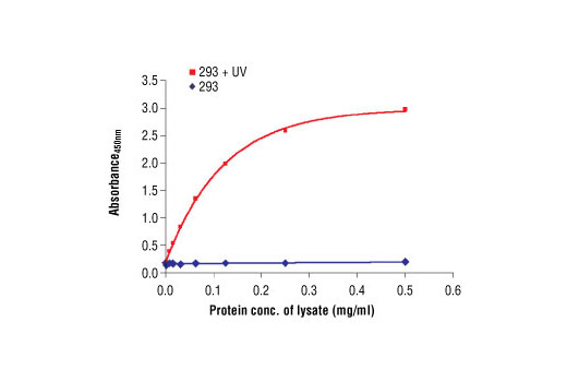The relationship between lysate protein concentration from untreated and UV-treated 293 cells and the absorbance at 450 nm using PathScan<sup>® </sup>Phospho-SAPK/JNK (Thr183/Tyr185) Sandwich ELISA Antibody Pair #7217. 293 cells were treated with UV, allowed to recover for 30 minutes at 37ºC and then lysed.