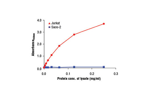 Figure 2: The relationship between protein concentration of lysates from Jurkat (Rb-positive) and Saos-2 (Rb-negative) cells and the absorbance at 450 nm is shown, as detected by the PathScan<sup>®</sup> Total Rb Sandwich ELISA Kit #12915.