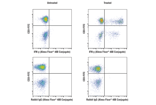 Flow cytometric analysis of human peripheral blood mononuclear cells, untreated (left column) or treated (right column) with TPA #4174 (40 nM, 4 hr), Ionomycin #9995 (2 μM, 4 hr), and Brefeldin A #9972 (1 μg/mL, last 3 hr of stimulation), using IFN-γ (D3H2) XP<sup>®</sup> Rabbit mAb (Alexa Fluor<sup>®</sup> 488 Conjugate) (top row) or concentration-matched Rabbit (DA1E) mAb IgG XP<sup>®</sup> Isotype Control (Alexa Fluor<sup>®</sup> 488 Conjugate) #2975 (bottom row). Cells co-stained with #19881 CD3 (UCHT1) Mouse mAb (APC Conjugate).
