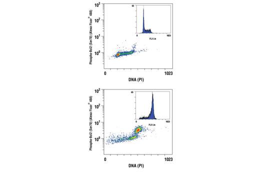 Monoclonal Antibody - Phospho-Bcl-2 (Ser70) (5H2) Rabbit mAb (Alexa Fluor® 488 Conjugate), UniProt ID P10415, Entrez ID 596 #2834 - Primary Antibody Conjugates