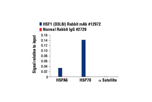 Chromatin immunoprecipitations were performed with cross-linked chromatin from HeLa cells heat shocked for 1h and either HSF1 (D3L8I) Rabbit mAb or Normal Rabbit IgG #2729 using SimpleChIP<sup>®</sup> Enzymatic Chromatin IP Kit (Magnetic Beads) #9003. The enriched DNA was quantified by real-time PCR using SimpleChIP<sup>®</sup> Human HSPA6 Promoter Primers #5551, human HSP70 intron 1 primers, and SimpleChIP<sup>®</sup> Human α Satellite Repeat Primers #4486. The amount of immunoprecipitated DNA in each sample is represented as signal relative to the total amount of input chromatin, which is equivalent to one.