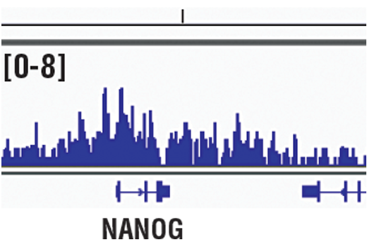 Chromatin immunoprecipitations were performed with cross-linked chromatin from NCCIT cells and WDR5 (D9E1I) Rabbit mAb, using SimpleChIP<sup>®</sup> Plus Enzymatic Chromatin IP Kit (Magnetic Beads) #9005. DNA Libraries were prepared using SimpleChIP<sup>®</sup> ChIP-seq DNA Library Prep Kit for Illumina<sup>®</sup> #56795. The figure shows binding across NANOG, a known target gene of WDR5 (see additional figure containing ChIP-qPCR data). For additional ChIP-seq tracks, please download the product data sheet.