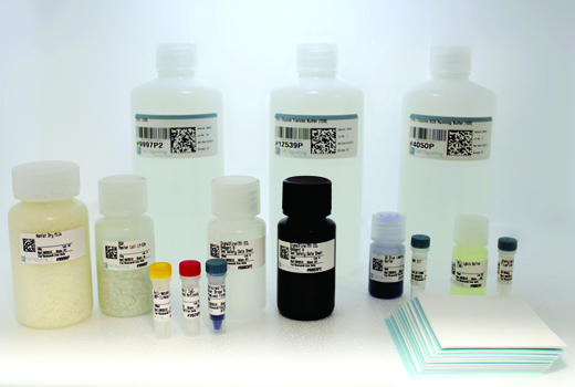Buffer Kit - Western Blotting Application Solutions Kit - Western Blotting - 1 Kit #12957 - Signal Transduction Reagents
