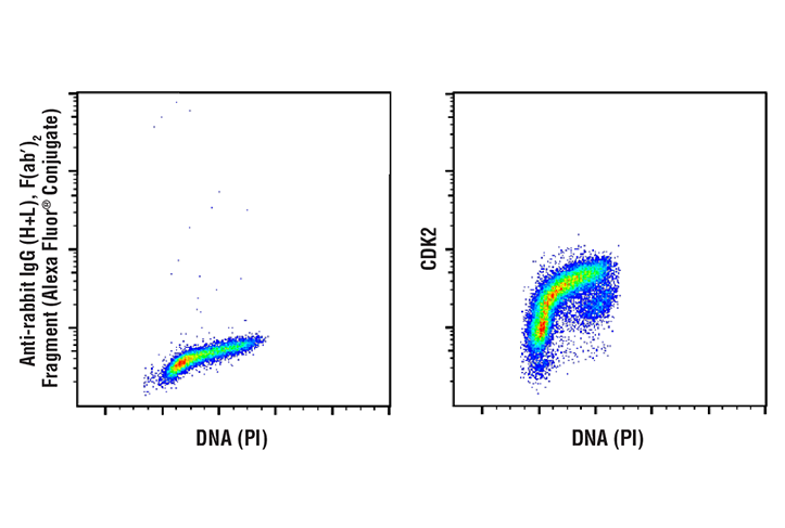 Flow Cytometry Image 1: CDK2 (78B2) Rabbit mAb