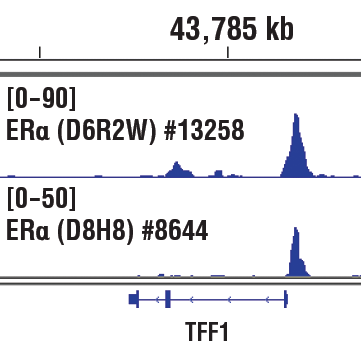 Chromatin immunoprecipitations were performed with cross-linked chromatin from MCF7 cells grown in phenol red free medium and 5% charcoal stripped FBS for 4 days, then treated with β-estradiol (10 nM) for 45 minutes and either Estrogen Receptor α (D6R2W) Rabbit mAb or Estrogen Receptor α (D8H8) Rabbit mAb #8644, using SimpleChIP<sup>®</sup> Plus Enzymatic Chromatin IP Kit (Magnetic Beads) #9005. DNA Libraries were prepared using SimpleChIP<sup>®</sup> ChIP-seq DNA Library Prep Kit for Illumina<sup>®</sup> #56795. The figure shows binding across TFF1/pS2, a known target gene of Estrogen Receptor α (see additional figure containing ChIP-qPCR data). For additional ChIP-seq tracks, please download the product data sheet.