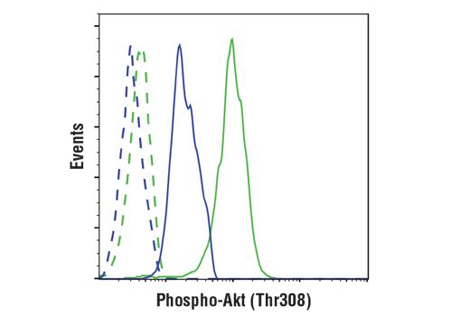 Flow cytometric analysis of Jurkat cells, untreated (green) or treated with LY294002 #9901, wortmannin #9951 and U0126 #9903 (blue), using Phospho-Akt (Ser473) (D9E) XP<sup>®</sup> Rabbit mAb (solid line) compared to a concentration-matched Rabbit (DA1E) mAb IgG XP® Isotype Control #3900 (dashed line). Anti-rabbit IgG (H+L), F(ab')<sub>2</sub> Fragment (Alexa Fluor® 488 Conjugate) #4412 was used as a secondary antibody.