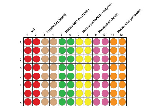 Figure 2. Schematic representation of a 96-well plate depicting the color-code of the reagents used to detect endogenous levels of Akt1 (red; 1 & 2), Phospho-Akt1 (Ser473) (tan; 3 & 4), Phospho-MEK1 (Ser217/221) (green; 5 & 6), Phospho-p38 MAPK (Thr180/Tyr182) (yellow; 7 & 8), Phospho-Stat3 (Tyr705) (dark pink; 9 & 10) and Phospho-NF-κB p65 (Ser536) (orange; 11 & 12).