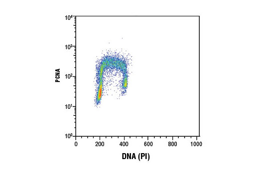 Flow cytometric analysis of Jurkat cells using PCNA (D3H8P) XP<sup>®</sup> Rabbit mAb and Propidium Iodide (PI)/RNase Staining Solution #4087 to measure DNA content. Anti-rabbit IgG (H+L), F(ab')2 Fragment (Alexa Fluor<sup>®</sup> 488 Conjugate) #4412 was used as a secondary antibody.