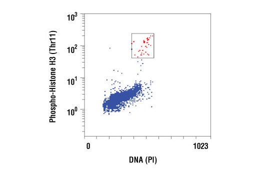 Monoclonal Antibody - Phospho-Histone H3 (Thr11) (C2A6) Rabbit mAb, UniProt ID P68431, Entrez ID 8350 #9767, Chromatin Regulation / Acetylation