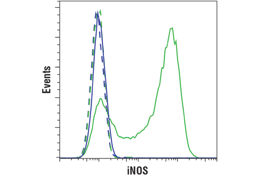 Flow cytometric analysis of Raw309.CR.1 cells, untreated (blue) or treated with LPS (1ug/ml, 16 hrs; green) using iNOS (D6B6S) Rabbit mAb (solid lines) or concentration matched Rabbit (DA1E) mAb IgG XP<sup>®</sup> Isotype Control #3900 (dashed lines). Anti-rabbit IgG (H+L), F(ab')<sub>2</sub> Fragment (Alexa Fluor<sup>®</sup> 488 Conjugate) #4412 was used as a secondary antibody.