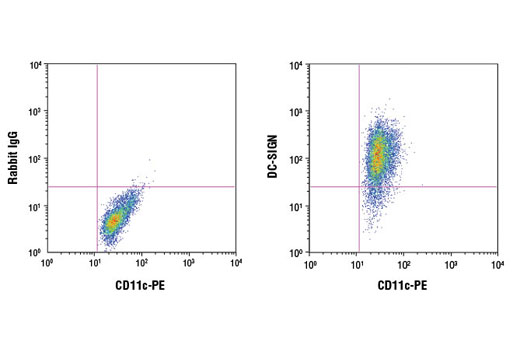 Flow cytometric analysis of human monocyte-derived dendritic cells stained with anti-human CD11c PE and either Rabbit (DA1E) mAb IgG XP<sup>®</sup> Isotype Control #3900 (left) or DC-SIGN (D7F5C) XP<sup>®</sup> Rabbit mAb (right). Anti-rabbit IgG (H+L), F(ab')<sub>2</sub> Fragment (Alexa Fluor<sup>®</sup> 647 Conjugate) #4414 was used as a secondary antibody.