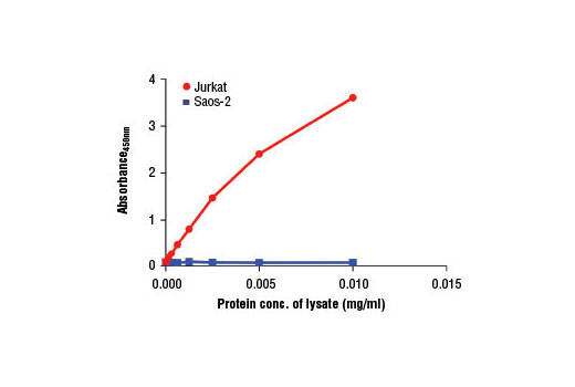 Figure 2: The relationship between protein concentration of lysates from Jurkat (Rb positive) and Saos-2 (Rb negative) cells and the absorbance at 450 nm is shown, as detected by the PathScan<sup>®</sup> Phospho-Rb (Ser807/811) Sandwich ELISA Kit #13152.