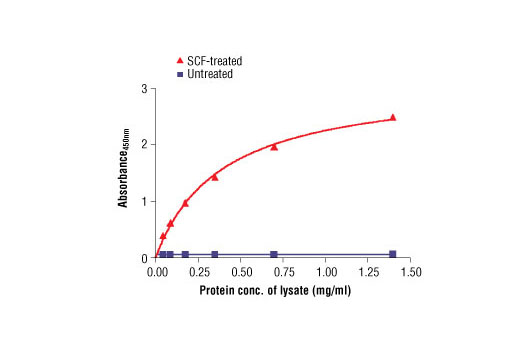 Figure 2. The relationship between protein concentration of lysates from untreated and SCF-treated H526 lysates and the absorbance at 450 nm is shown. Cells (0.5x10<sup>6</sup> cells/ml) were serum starved overnight and then treated with Human Stem Cell Factor (hSCF) #8925 (100 ng/ml) for 5 min at 37°C, and then lysed.