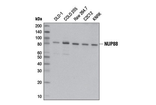 Human Protein Export from Nucleus - count 20