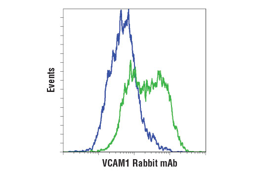 Flow cytometric analysis of fixed, non-permeabilized HUVEC cells, untreated (blue) or treated with Human Tumor Necrosis Factor-α (hTNF-α) #8902 (10 ng/ml, 16 hr; green) using VCAM1 (E1E8X) Rabbit mAb. Anti-rabbit IgG (H+L), F(ab')<sub>2</sub> Fragment (Alexa Fluor<sup>® </sup>488 Conjugate) #4412 was used as a secondary antibody.