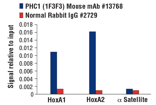 Monoclonal Antibody - PHC1 (1F3F3) Mouse mAb, UniProt ID P78364, Entrez ID 1911 #13768, Chromatin Ip