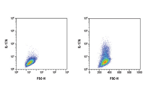 Flow cytometric analysis of EL4 cells, untreated (left) or treated with TPA #4174 (50 ng/ml), Ionomycin, Calcium Salt #9995 (500 ng/ml), and Brefeldin A #9972 (500 ng/ml, overnight; right), using IL-17A (D1X7L) Rabbit mAb (Mouse Specific). Anti-rabbit IgG (H+L), F(ab')<sub>2</sub> Fragment (Alexa Fluor<sup>®</sup> 488 Conjugate) #4412 was used as a secondary antibody.