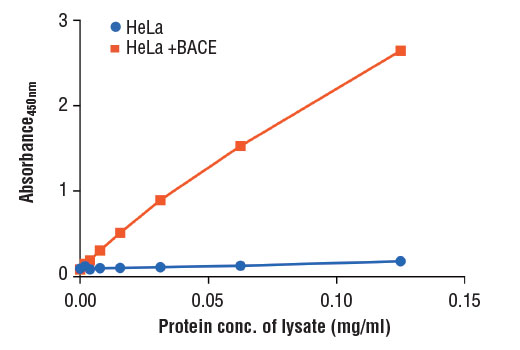 Figure 2: The relationship between protein concentration of lysates from HeLa cells, untransfected or transfected with a construct expressing BACE protein, and the absorbance at 450 nm as detected by the PathScan<sup>®</sup> Total BACE Sandwich ELISA Kit is shown.