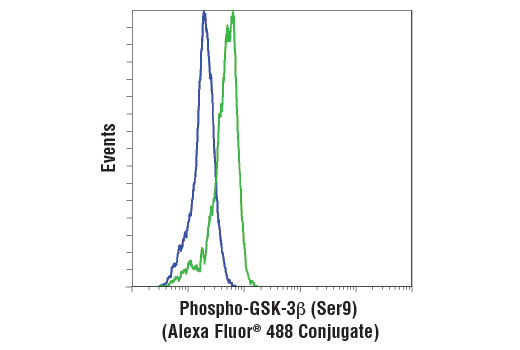 Flow cytometric analysis of PC-3 cells, untreated (green) or treated with LY294002 #9901 and Wortmannin #9951 (blue), using Phospho-GSK-3β (Ser9) (D85E12) XP<sup>®</sup> Rabbit mAb (Alexa Fluor<sup>®</sup> 488 Conjugate).