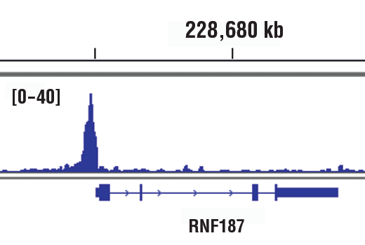 Monoclonal Antibody Chromatin Ip Response to Antibiotic