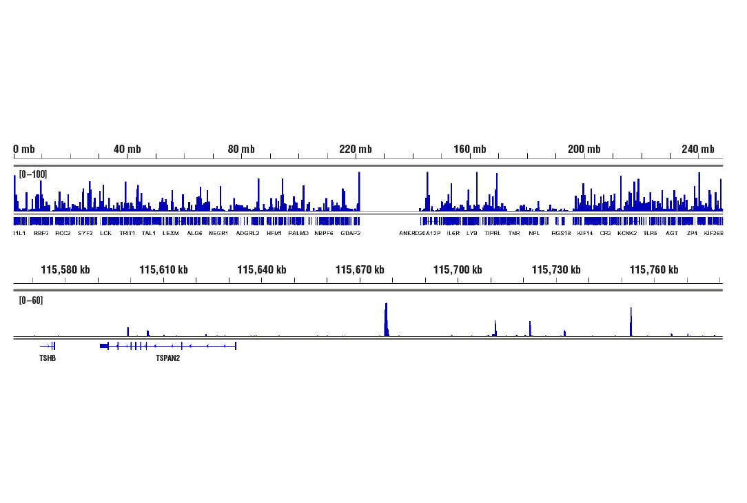 Image 13: Hippo Pathway: Upstream Signaling Antibody Sampler Kit