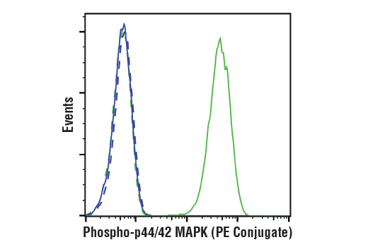 Flow cytometric analysis of Jurkat cells, treated with U0126 #9903 (10 μM, 2.5 hr; blue) or treated with TPA (12-O-Tetradecanoylphorbol-13-Acetate) #4174 (200 μM, 30 min; green), using Phospho-p44/42 MAPK (Erk1/2) (Thr202/Tyr204) (197G2) Rabbit mAb (PE Conjugate) (solid line) or concentration-matched Rabbit (DA1E) mAb IgG XP<sup>®</sup> Isotype Control (PE Conjugate) #5742 (dashed line).