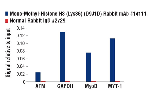 Image 12: Methyl-Histone H3 (Lys36) Antibody Sampler Kit
