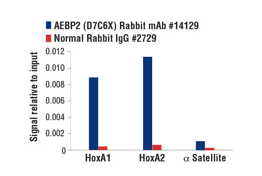 Chromatin immunoprecipitations were performed with cross-linked chromatin from NCCIT cells and either AEBP2 (D7C6X) Rabbit mAb or Normal Rabbit IgG #2729 using SimpleChIP<sup>®</sup> Enzymatic Chromatin IP Kit (Magnetic Beads) #9003. The enriched DNA was quantified by real-time PCR using SimpleChIP<sup>®</sup> Human HoxA1 Intron 1 Primers #7707, SimpleChIP<sup>®</sup> Human HoxA2 Promoter Primers #5517, and SimpleChIP<sup>® </sup>Human α Satellite Repeat Primers #4486. The amount of immunoprecipitated DNA in each sample is represented as signal relative to the total amount of input chromatin, which is equivalent to one.