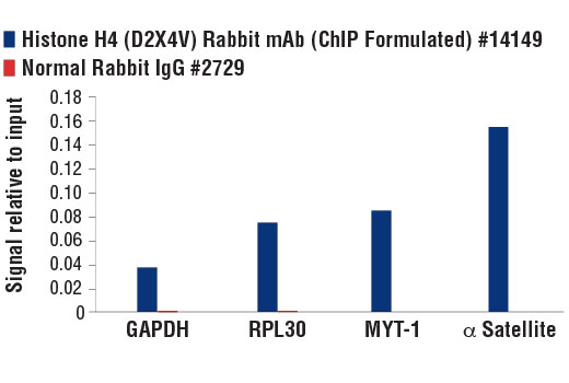 Monoclonal Antibody - Histone H4 (D2X4V) Rabbit mAb (ChIP Formulated), UniProt ID P62805, Entrez ID 8359 #14149