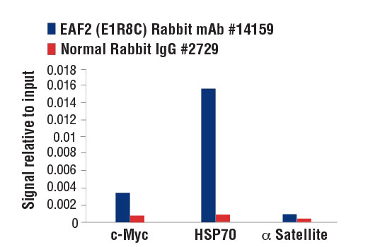 Chromatin Immunoprecipitation Image 1: EAF2 (E1R8C) Rabbit mAb