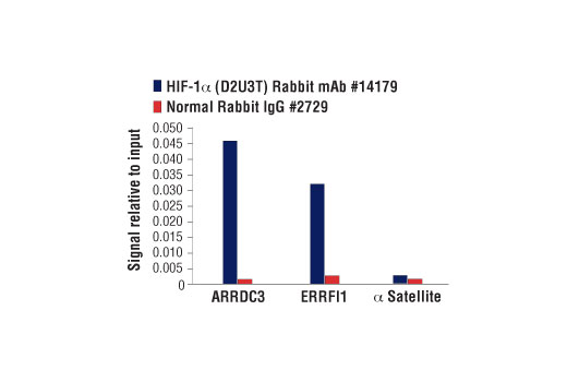 Chromatin immunopreciptations were performed with cross-linked chromatin from MCF7 cells treated with cobalt chloride<sub> </sub>(100 μM) overnight and either HIF-1α (D2U3T) Rabbit mAb or Normal Rabbit IgG #2729, using SimpleChIP<sup>® </sup>Enzymatic Chromatin IP Kit (Magnetic Beads) #9003. The enriched DNA was quantified by real-time PCR using SimpleChIP<sup>® </sup>Human ARRDC3 Downstream Primers #75671, human ERRFI1 upstream primers, and SimpleChIP<sup>®</sup> Human α Satelite Repeat Primers #4486. The amount of immunoprecipitated DNA in each sample is represented as signal relative to the total amount of input chromatin, which is equivalent to one.