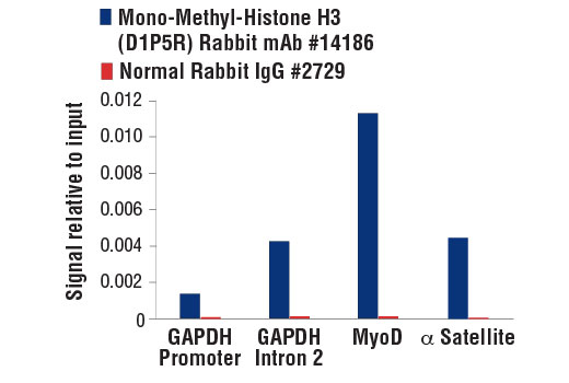 Chromatin Immunoprecipitation Image 1: Mono-Methyl-Histone H3 (Lys9) (D1P5R) Rabbit mAb