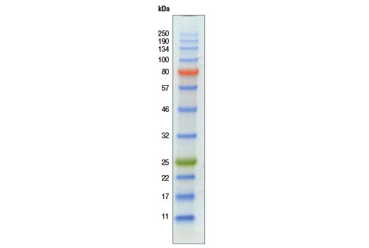 Image 1: Color-coded Prestained Protein Marker, Broad Range (11-250 kDa)