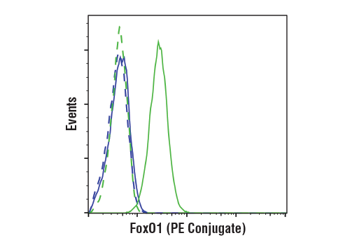 Flow cytometric analysis of Jurkat cells (blue) and IGROV-1 (green) using FoxO1 (C29H4) Rabbit mAb (PE Conjugate) (solid lines) or concentration-matched Rabbit (DA1E) mAb IgG XP<sup>®</sup> Isotype Control (PE Conjugate) #5742 (dashed lines).