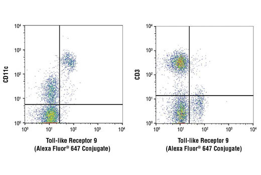 Monoclonal Antibody Flow Cytometry Response to Bacterium