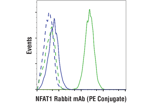 Flow cytometric analysis of LNCaP cells (blue) and Jurkat cells (green) using NFAT1 (D43B1) XP® Rabbit mAb (PE Conjugate) (solid lines) or a concentration-matched Rabbit (DA1E) mAb IgG XP<sup>®</sup> Isotype Control (PE Conjugate) #5742 (dashed lines).