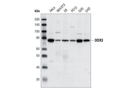 Polyclonal Antibody Regulation of Protein Complex Assembly - count 20