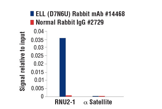 Chromatin immunoprecipitations were performed with cross-linked chromatin from 293T cells and either ELL (D7N6U) Rabbit mAb or Normal Rabbit IgG #2729 using SimpleChIP<sup>®</sup> Enzymatic Chromatin IP Kit (Magnetic Beads) #9003. The enriched DNA was quantified by real-time PCR using SimpleChIP<sup>®</sup> Human RNU2-1 Promoter Primers #14084 and SimpleChIP<sup>®</sup> Human α Satellite Repeat Primers #4486. The amount of immunoprecipitated DNA in each sample is represented as signal relative to the total amount of input chromatin, which is equivalent to one.