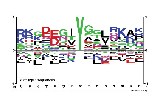 Representative motif analysis of 2362 phospho-tyrosine tryptic peptides generated from a PhosphoScan<sup>®</sup> experiment of Jurkat cells treated with Calyculin A #9902 and pervanadate using PTMScan<sup>®</sup> Phospho-Tyrosine Motif (Y*) (P-Tyr-1000) Immunoaffinity Beads. The Motif Logo was generated using the PhosphoSitePlus<sup>®</sup> Logo Generator and reflects relative frequency of residues in each position. For more information, please visit PhosphoSitePlus<sup>®</sup> at www.phosphosite.org.