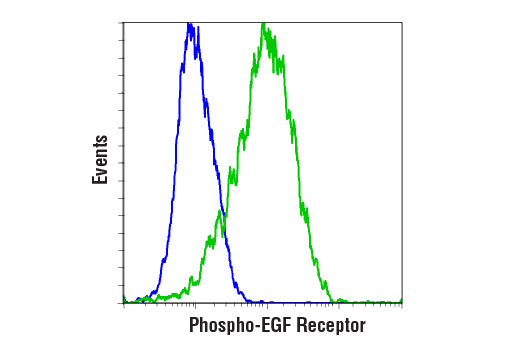 Flow cytometric analysis of serum-starved A-431 cells, untreated (blue) or treated with Human Epidermal Growth Factor (hEGF) #8916 (1 μg/ml, 20 min; green), using Phospho-EGF Receptor (Tyr1068) (D7A5) XP<sup>®</sup> Rabbit mAb (PE Conjugate).